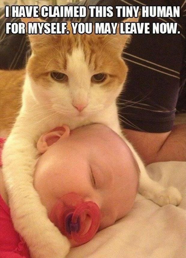 Top 30 Funny Cat Memes funny
