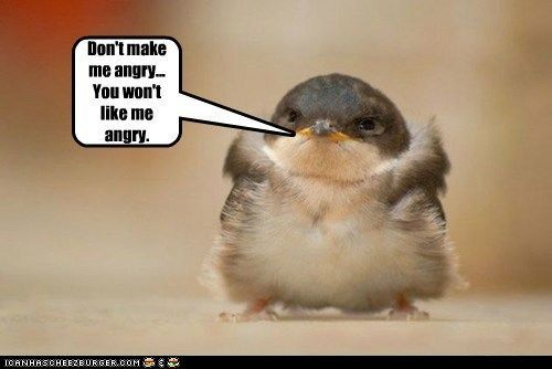 Funny Animal with Captions