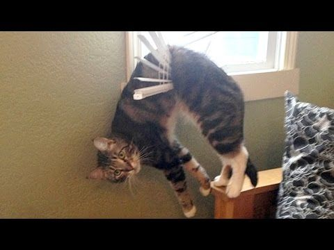 Nothing will make you laugh harder than funny animals Funny animal pilation