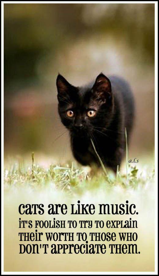 black cats ♥♥♥