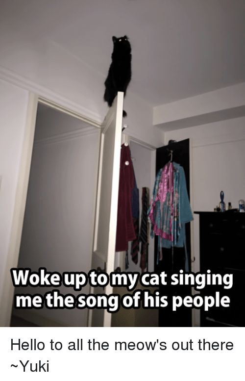 Hello Memes and Singing Woke up tomy cat singing me the song of