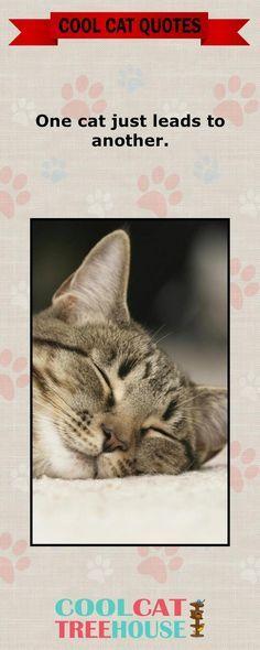Cats are the inspiration on living a joyful life Enjoy