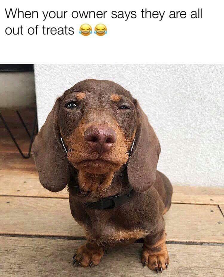 This is a real thing in dachshunds n t dare withhold their treats