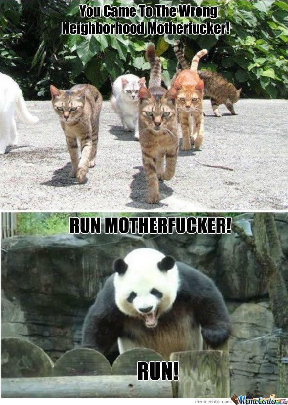 [RMX] Gangsta Cats