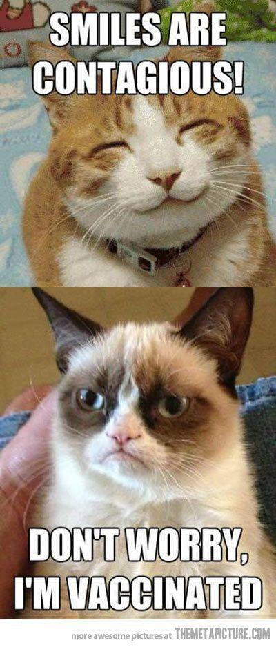Top 40 most funniest grumpy cat pics Funny Quotes
