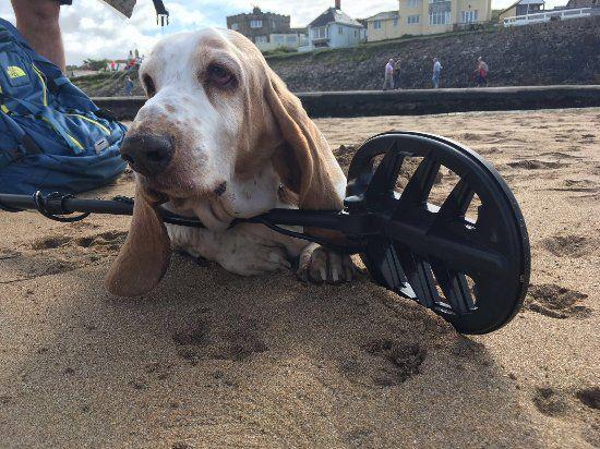 Summerleaze beach September 18th 2016
