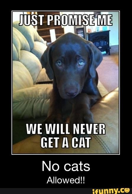 XD Dogs don t like cats