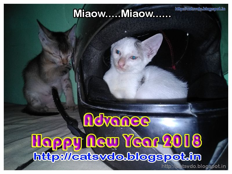 Advance Happy New Year 2018 with Cats