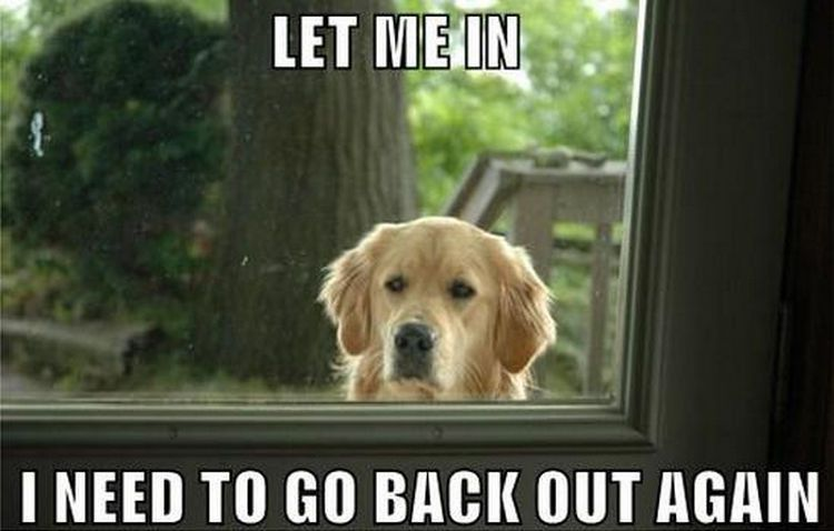 Let me in I need to go back out meme