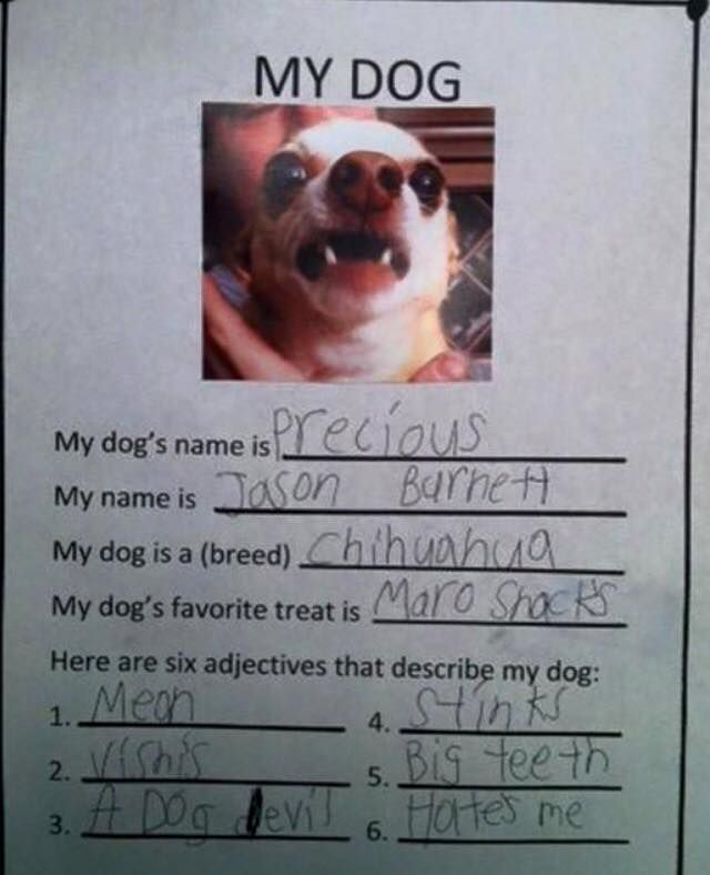 funny kids school work dogs