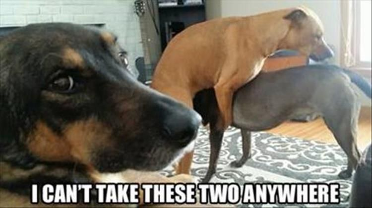 23 Funny Animal Memes And The Day Cute