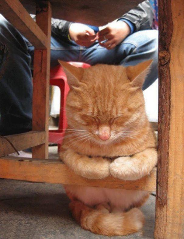 19 Sleeping Cat