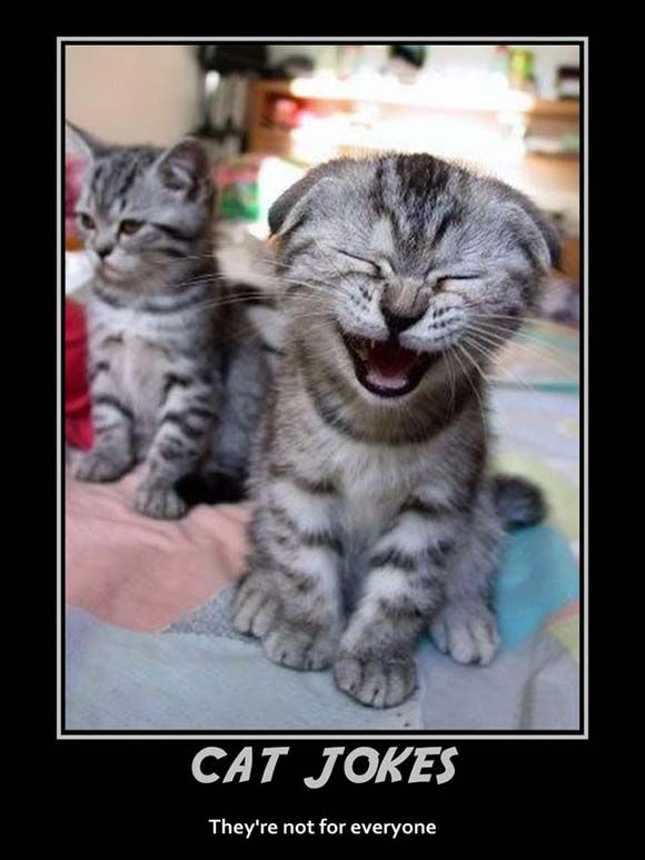 Download the Inspirational Funny Cat Jokes or Pictures