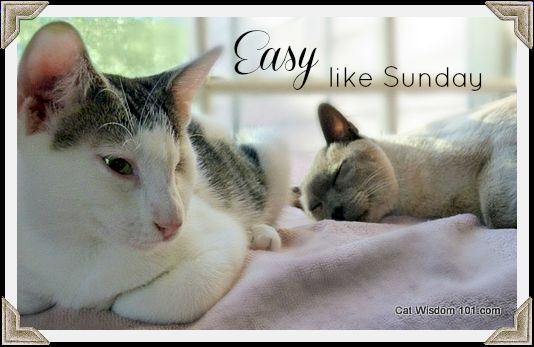 sunday easy cats quote Easy Like Sunday