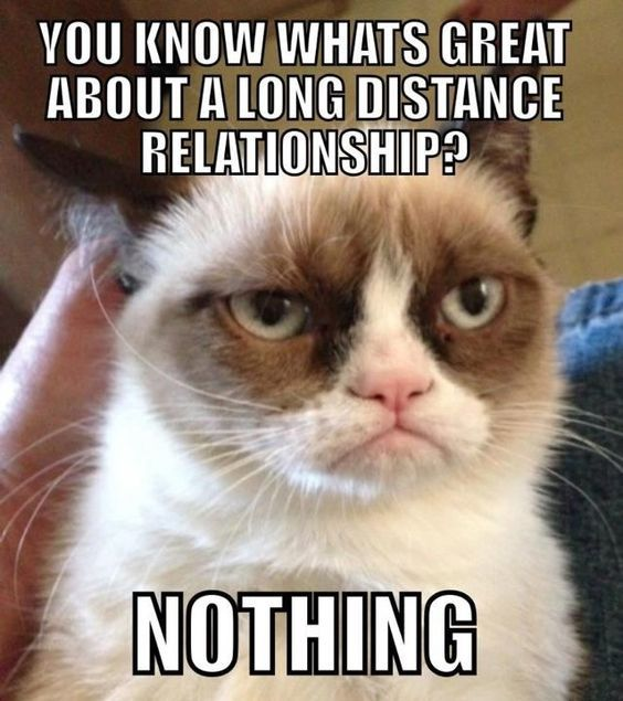 Download the Inspirational Funny Cat Relationship Memes