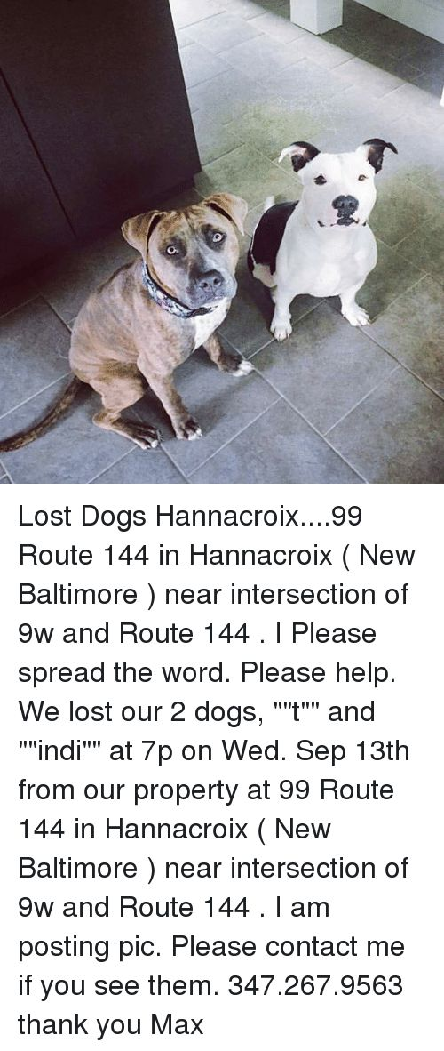 Dogs Memes and Lost Lost Dogs Hannacroix 99 Route