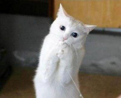Funny Cats – Cute Cat