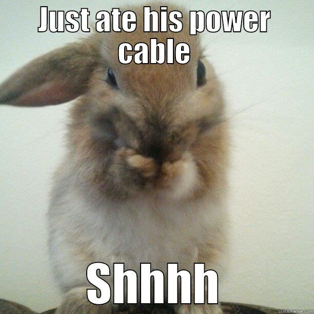 Cutest bunny ever JUST ATE HIS POWER CABLE SHHHH Misc