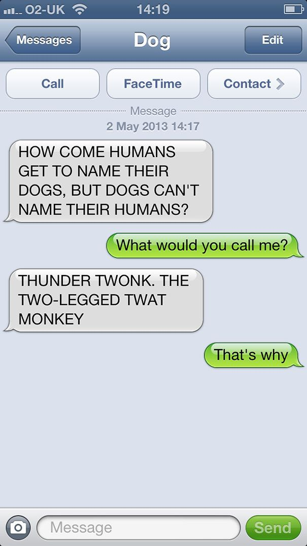 Download the Lovely Funny Animal Memes Im Special