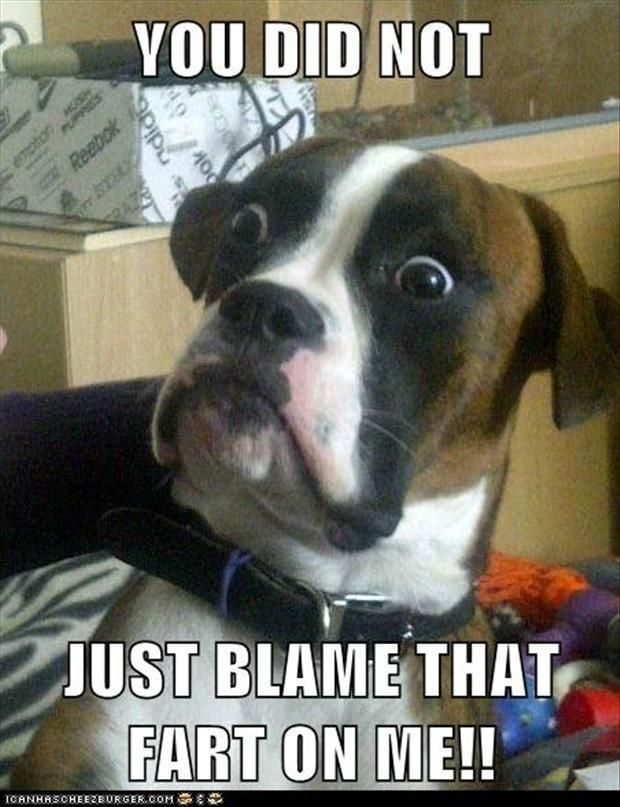 funny dog picture you did not just blame that fart on me