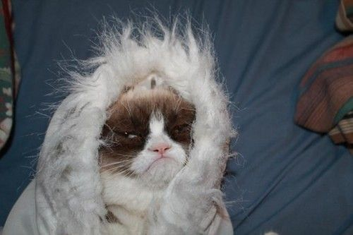 "Create meme ""autumn huesen funny cat grumpy cat winter sol r"""