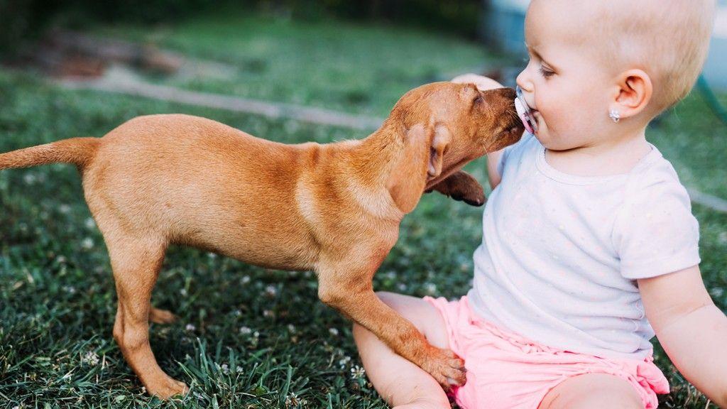can my pet make my baby sick 1024x576