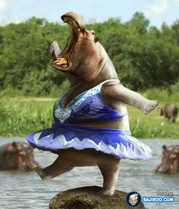 large Funny Looking Animals Funny Animals Dancing Animals Human Teeth Funny Animal