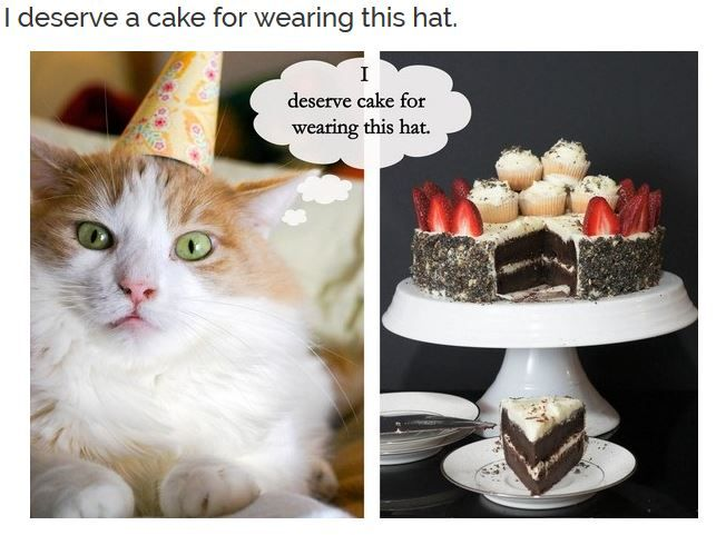 Cute cat birthday meme photos collections