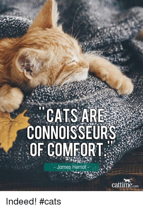 Memes Indeed and 🤖 CATS ARE CONNOISSEURS OF FORT James Herriot cattime
