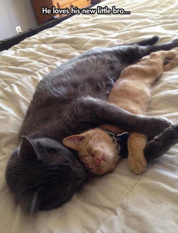 Love little bro Cuddles I Love Cats Crazy Cats Cute Cats Adorable