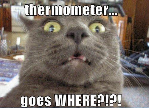 50 Funny Cat Memes