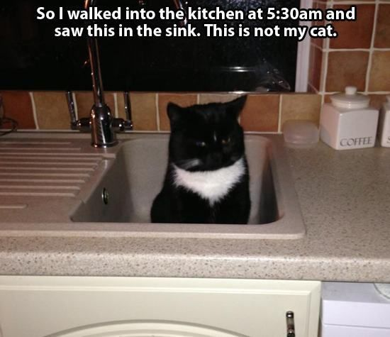 We all know that cats can be total ninjas e second they re sitting on your lap purring away the next second they re in the kitchen knocking something