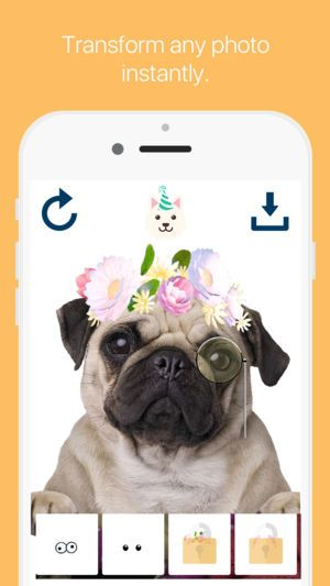 Pet Filters and Effects Cute cat and dog photos 4