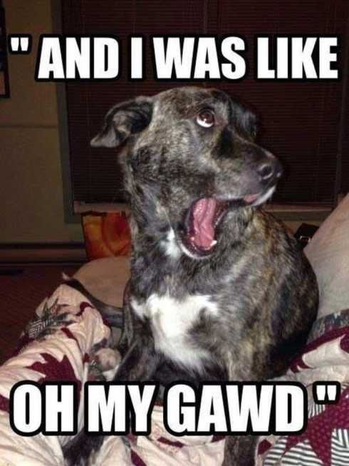 Download the Luxury Funny Dog Faces Pictures