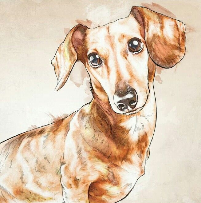 Dachshund dachshund Weiner Dogs Pet Dogs Doggies Funny Dogs Oliver Gal