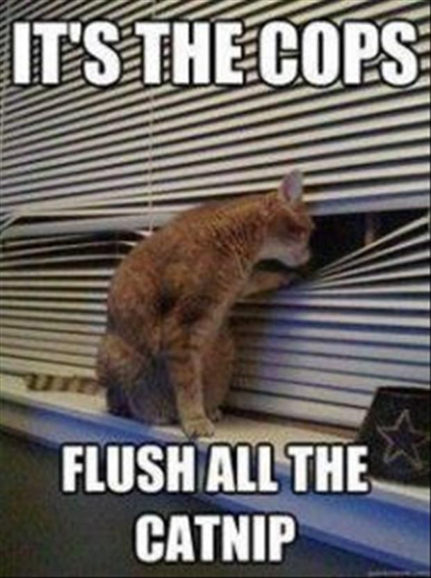 its the cops flush the s funny cats