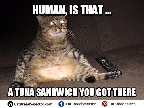 Fat Cat Memes Fat Cat Memes Funny Cats