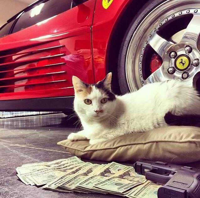 Cats and money and guns