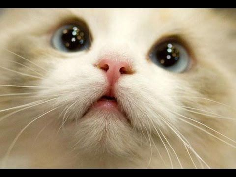 BEST 2 HOUR LONG FUNNY CAT PILATION BIGGEST VIDEO of Funny Kitty Cat Fails & Kitten Moments