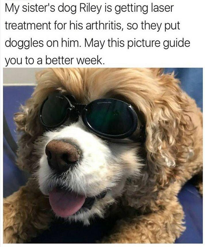 25 Dog Memes