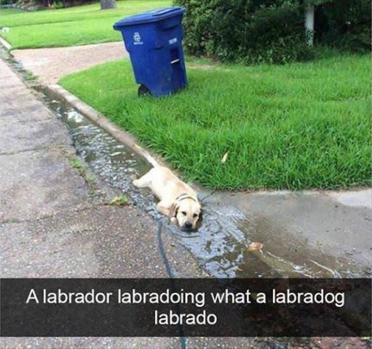 Funny Animal Picture Dump The Day 24 Pics