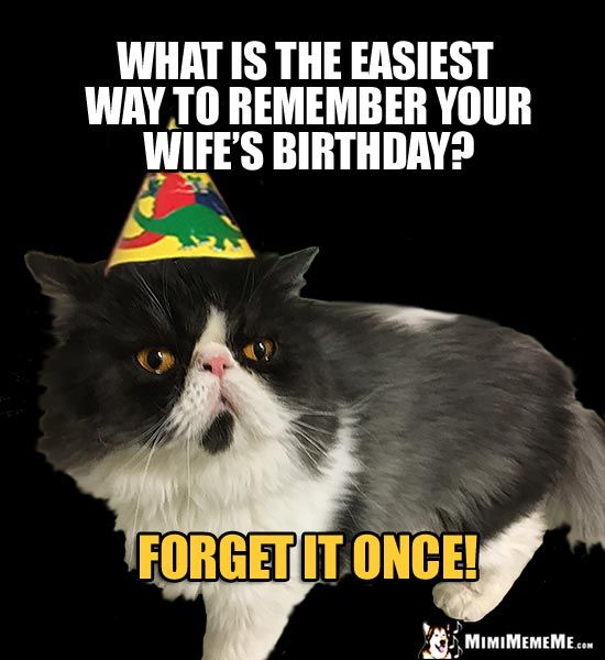 Party Cat Asks What is the easiest way to remember your wife s birthday For