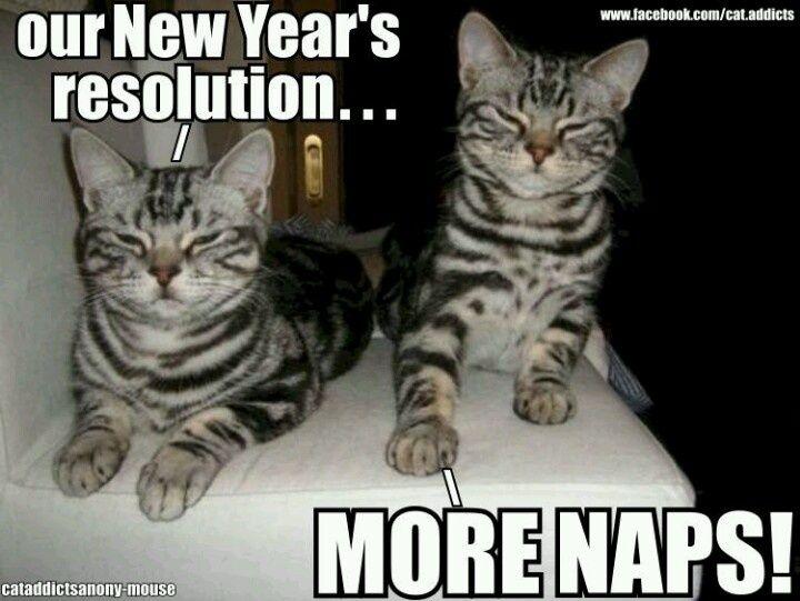 Happy New Year 2019 Cat Memes