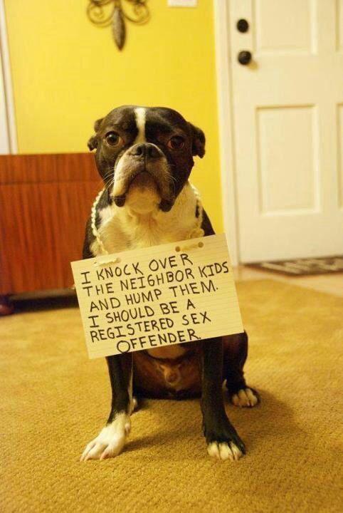 Doggie Punishment