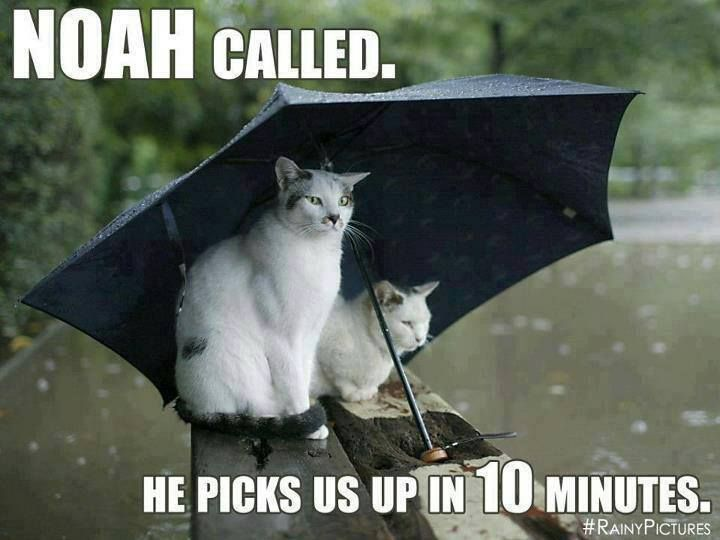 Download the New Funny Cat In the Rain Pictures and Quotes