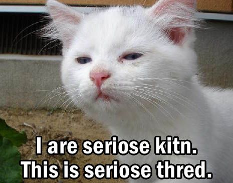 Funny Cats with Words Free Download Wallpaper