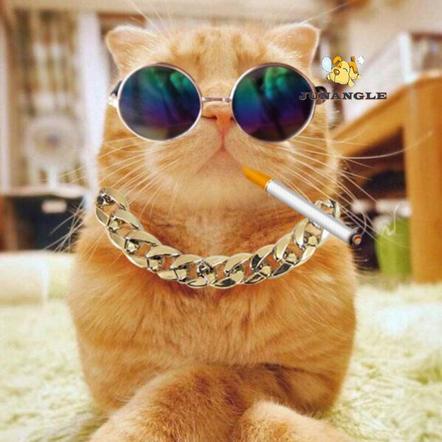 Plastic Gold Chain Cat Dog Necklace for Pet Small Dogs Collar Puppy Cat Funny Collars Pets Supplies Product French Bulldog Teddy
