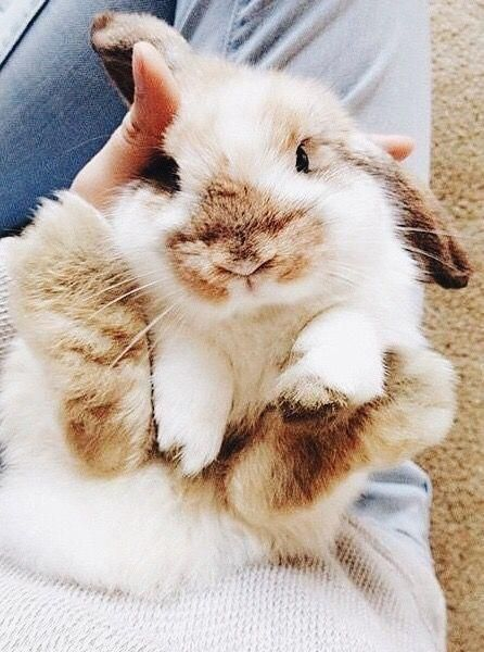 Napi cuki year of the rabbit Pinterest