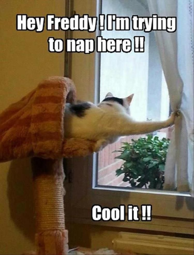 Download the Prodigious Funny Animal Pictures with Words
