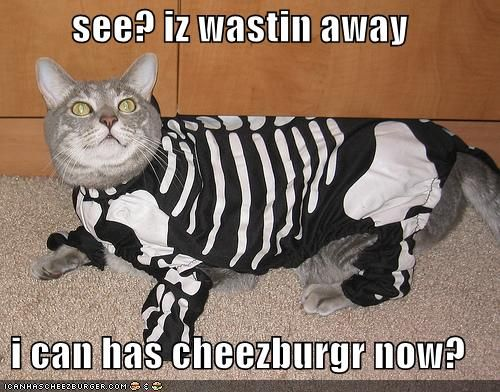Funny Image Collection Download Very Creative and Funny Cat Halloween